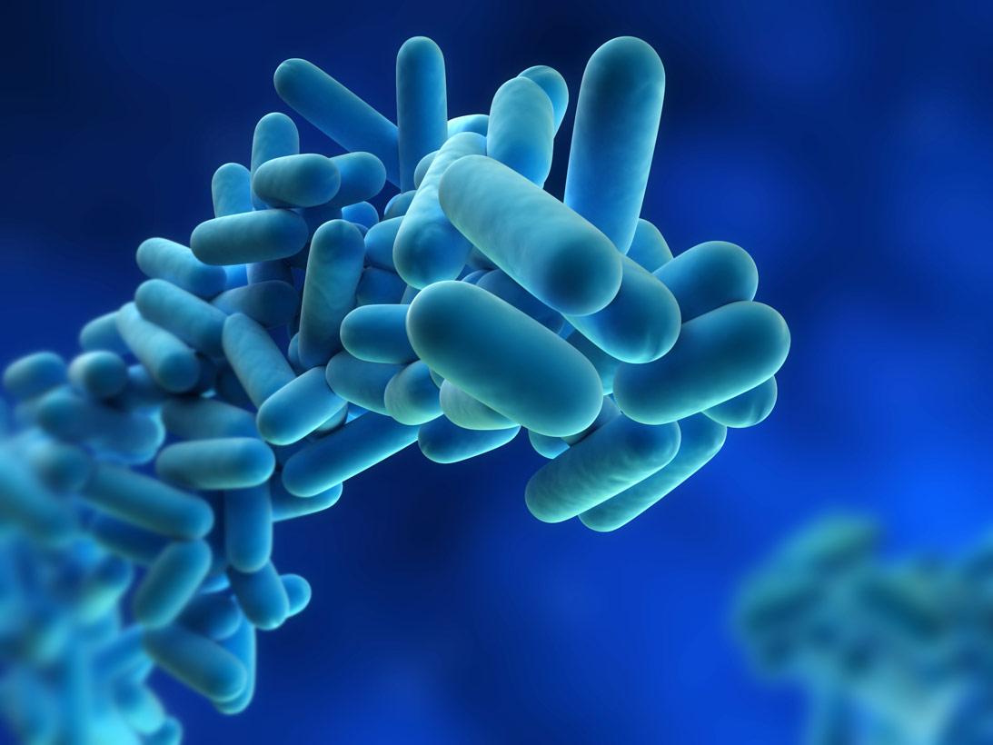 chemistry news quorum sensing bacterial communication in chemical